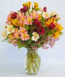 Inglis Florists Dazzling Alstroemeria Special from Inglis Florist in Tucson, AZ