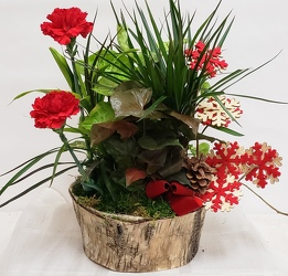 Seasonal Planter<br>Inglis Florists from Inglis Florist in Tucson, AZ