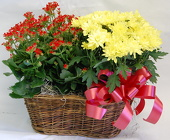 Double Blooming Basket<br>Inglis Florists