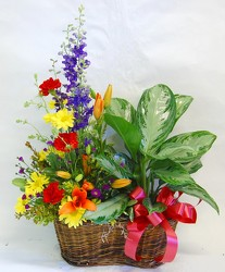 Inglis' Assorted Plant Basket with Fresh Flowers from Inglis Florist in Tucson, AZ