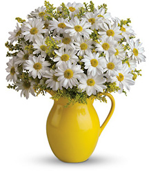 Teleflora's Sunny Day Pitcher of Daisies from Inglis Florist in Tucson, AZ