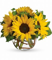 Sunny Sunflowers<br>Teleflora from Inglis Florist in Tucson, AZ