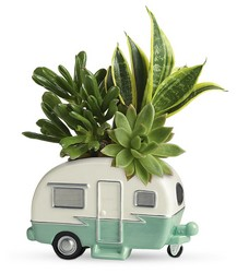 Cool Camper Garden from Inglis Florist in Tucson, AZ