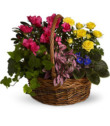 Blooming Garden Basket<br>Teleflora from Inglis Florist in Tucson, AZ