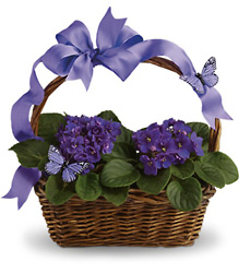 Violets And Butterflies from Inglis Florist in Tucson, AZ