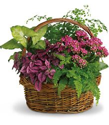 Secret Garden Basket<br>Teleflora from Inglis Florist in Tucson, AZ