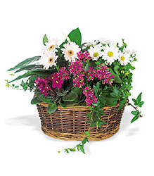 Traditional European Garden Basket from Inglis Florist in Tucson, AZ